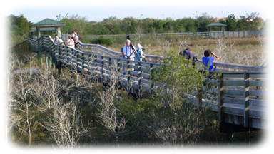 Everglades Birding Festival Chapel Trail Boardwalk